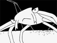 La Revolution Des Crabes